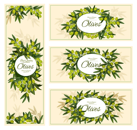 Olives banners for olive oil or extra virgin organic natural product. Vector design of green olives bunch and leaf for agriculture or food cooking Çizim