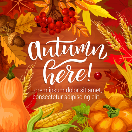 Autumn here poster or greeting card for fall season holiday. Vector pumpkin, corn and wheat harvest with oak acorns, maple leaf and rowan berries on wooden background
