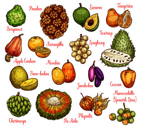 Exotic tropical fruits sketch with names. Vector pandan or pandanus, longkong or soursop apple and mombin, naranjilla or jambolan and bergamot fruit, lucuma or tangerine and physalis