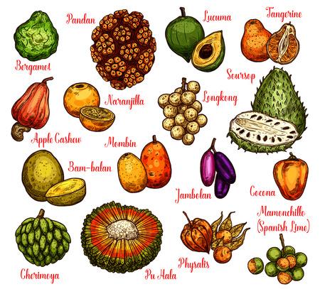 Schizzo di frutti tropicali esotici con nomi. Vector pandan o pandanus, longkong o soursop apple e mombin, naranjilla o jambolan e bergamotto, lucuma o mandarino e physalis Vettoriali