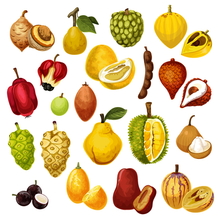 Exotische tropische Früchte. Vektor isolierte Tamarinde, Pepino und Jackfrucht oder Durian, Salak mit Jujube oder Sapodilla und Ackee-Apfel, Ambarella oder Jabuticaba und Kumquat-Frucht