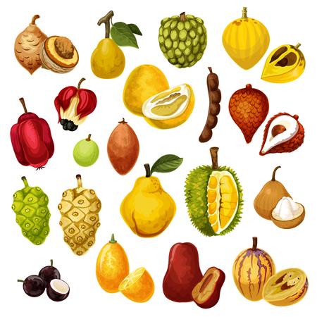 Fruits tropicaux exotiques. Vector isolé tamarin, pépino et jacquier ou durian, salak avec jujube ou sapodilla et pomme ackee, ambarella ou jabuticaba et kumquat