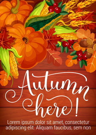 Autumn here poster of harvest and fall foliage for seasonal festival or holiday celebration. Vector design of pumpkin, corn or oak acorn and cranberry berry with autumn maple leaf on wooden background Ilustração
