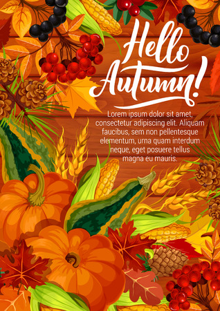 Hello Autumn quote poster with calligraphy and seasonal harvest of pumpkin and corn with berries. Vector autumn holiday design of pine cones in maple, oak acorn and rowan leaf foliage