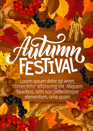 Autumn festival poster for seasonal fall fest or picnic. Vector autumn foliage design of maple or rowan leaf, acorns and wheat harvest with rowanberry on wooden background Ilustração