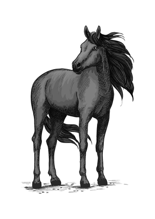 Black horse vector sketch. Wild mustang stallion standing with turned head. Farm or ranch equine animal symbol for equestrian racing sport, horse riding races club, bets or exhibition Ilustração