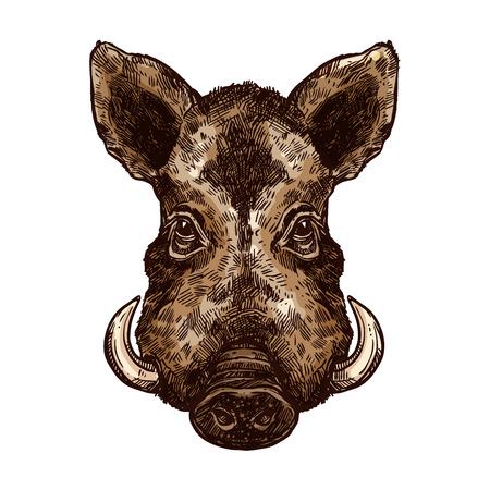 Schizzo di cinghiale, animale di maiale selvatico. Icona di vettore isolata testa di maiale o facocero africano della foresta e mammifero safari con zanna affilata per il simbolo del club di caccia, mascotte dello zoo o design di temi della fauna selvatica