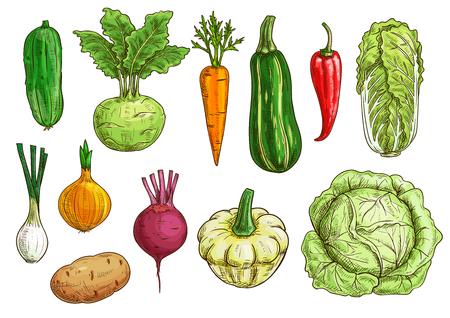Gemüse isolierte Skizze gesetzt. Frischer Bio-Pfeffer, Karotten, Zwiebeln, Rüben und Kartoffeln, Kohl und Gurken, Zucchini und Kohlrabi, Pattypan-Kürbis-Gemüse. Essensthemen, vegetarisches Menü, Farmmarktdesign