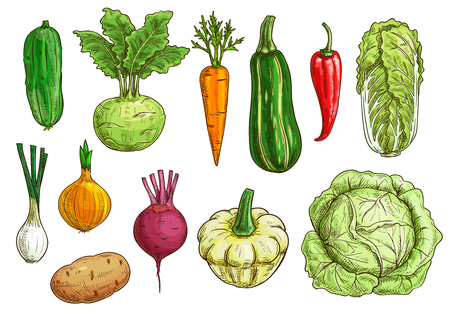 Vegetable isolated sketch set. Fresh organic pepper, carrot, onion, beet and potato, cabbage and cucumber, zucchini and kohlrabi, pattypan squash veggies. Food themes, vegetarian menu, farm market design