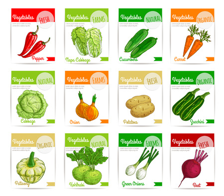 Vegetable label and tag set. Farm fresh carrot, pepper, onion, beet, cabbage, potato, zucchini, cucumber, kohlrabi and pattypan squash vegetable product cards and banners for food packaging design Illustration