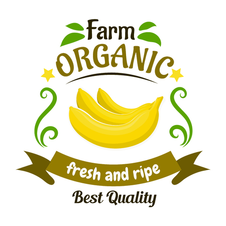Bunch of fresh and ripe banana fruits retro badge, bordered with header Organic Farm, ribbon banner, stars and green leaves. Banana fruits icon for greengrocery symbol or food packaging design