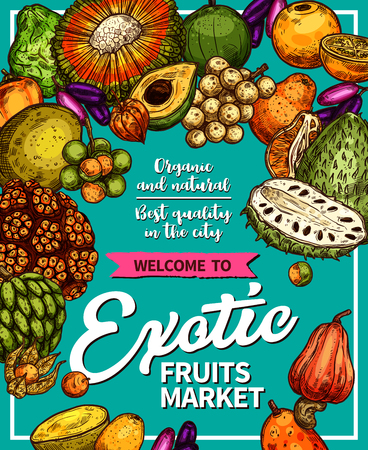 Exotic fruits sketch poster for farm market. Vector design of longkong, tropical soursop apple or mombin and pandan, bergamot fruit, lucuma or tangerine and physalis, naranjilla, and jambolan