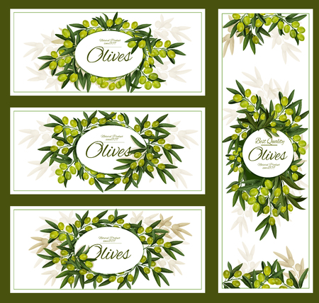Green olives posters and banners for olive oil product package. Vector advertisement design of olive tree branches with rip fruits harvest for Italian, Spanish or Mediterranean cuisine