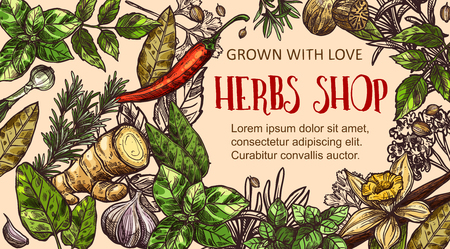Herb shop banner with natural spice frame. Basil, thyme and rosemary, chilli pepper, ginger and vanilla, nutmeg, garlic and bay leaf, sage and parsley sketch. Spice shop vector design