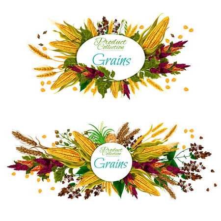 Cereal, vegetable and seed grains food. Ripe wheat, barley and rice, oat, corn and rye, millet, quinoa, buckwheat and spelt plant branch banner for healthy food and agriculture harvest design
