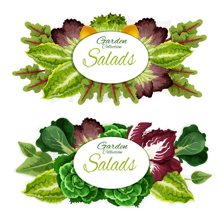 Green leaves vegetables and salads of health food ingredients. Lettuce, cabbage and spinach, bok choy, chard and watercress, radicchio and chicory veggies posters for farm market design