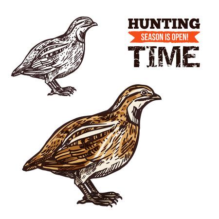 Perdrix grise avec des plumes jaunes et brunes sur l'aile et la poitrine. Croquis isolé d'oiseau perdrix, conception de saison ouverte de sport de chasse