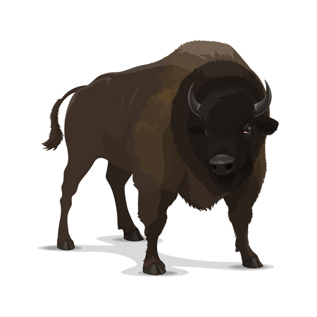 Bison wild animal cartoon character. Isolated brown bull of ox or buffalo mammal in aggressive pose. Zoo symbol, hunting sport club emblem or wildlife themes design