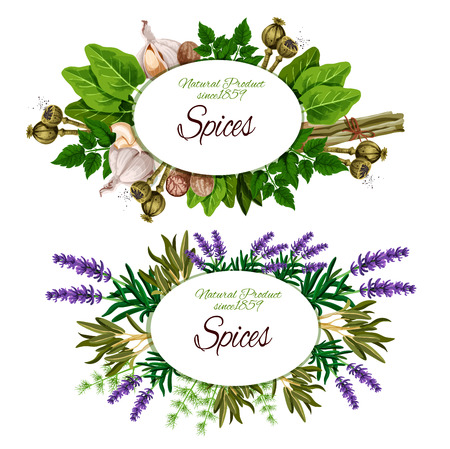 Etykieta przypraw z kulinarnymi ziołami, przyprawami warzywnymi i przyprawami spożywczymi. Rozmaryn, pietruszka i koperek, gałka muszkatołowa, czosnek i trawa cytrynowa, szałwia, szczaw i majeranek, kwiat lawendy i mak. Ilustracja wektorowa Ilustracje wektorowe