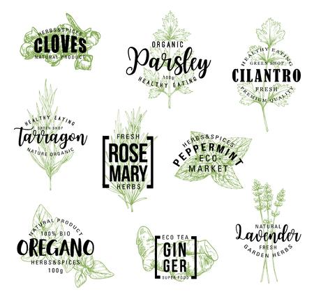 Specerijen en kruiden belettering, etiketten van natuurlijke voedselingrediënten. Rozemarijn, munt en peterselie, gember, oregano en kruidnagel, dragon, koriander en lavendelbloemschets. Vector kruiderijen illustraties Vector Illustratie