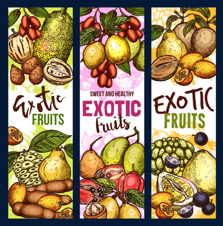 Exotic fruit sketch sweet food. Tropical pomelo, kumquat and quince, jackfruit, ackee and tamarind, morinda, sapodilla and jabuticaba berry, jujube, marula and sweetsop Stock Vector - 110027812