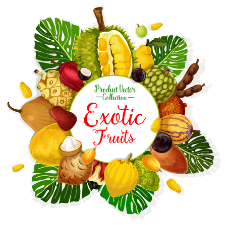 Exotic tropical fruits poster. Durian, pomelo and quince, cherimoya, tamarind and apple cashew, pepino, jabuticaba and gandaria, ackee, cocona and salak with palm leaf Standard-Bild - 110027815