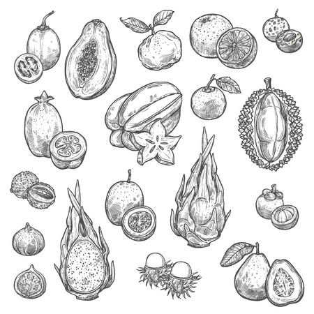 Croquis de fruits exotiques et de baies tropicales. Orange, papaye et durian, pamplemousse, figue et feijoa, carambole, dragon et fruit de la passion, litchi, goyave et tamarillo, ramboutan et longane
