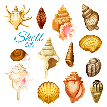 Seashell, sea animals and ocean beach mollusk. Scallop, snail and clam, cockle, turret shell, king crown and chiton. Isolated cartoon objects. Exotic summer, vacation travel themes design