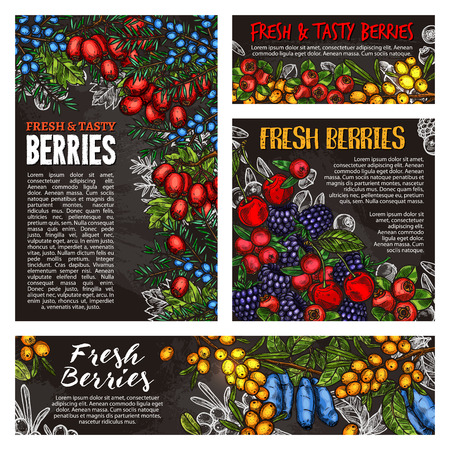 Cherry, blackberry and cranberry, blueberry, rowanberry and barberry, honeysuckle, buckthorn and juniper chalk sketch on blackboard. Chalkboard of wild forest and farm berries Stock Vector - 108230689