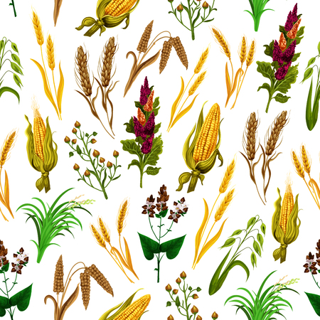 Grains and cereals pattern background. Vector seamless of corn, wheat, rye ear spikes and barley harvest, buckwheat and oats, rice and millet. Agriculture and food production or organic food theme