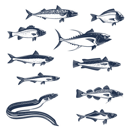 Fish sketch icons. Vector isolated fish scad or horse mackerel, scomber or anchovy and tuna, hake merluccius or sardine and sea bass or dorada gilt-head bream