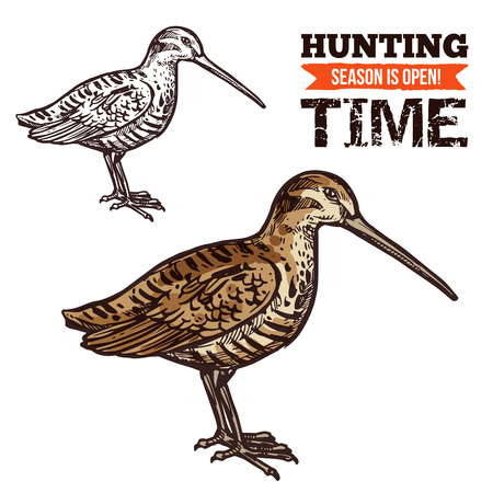 Vector isolated wild forest Eurasian woodcock bird, hunt adventure. Hunting open season, hunter society or hunt club theme dsign Illustration