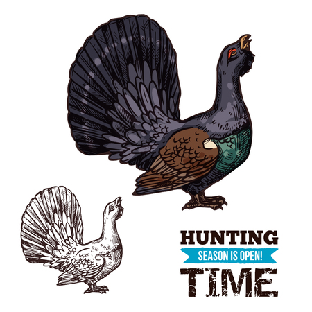 Vector isolated wild grouse or forest blackcock sketch, bird hunting adventure. Open season sketch poster, hunter society or club theme
