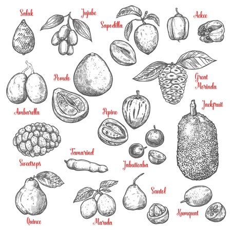 Exotic tropical fruits sketch. Vector isolated salak, jujube or sapodilla and ackee fruit with great morinda, jackfruit or pepino and jabuticaba or kumquat, tamarind and marula