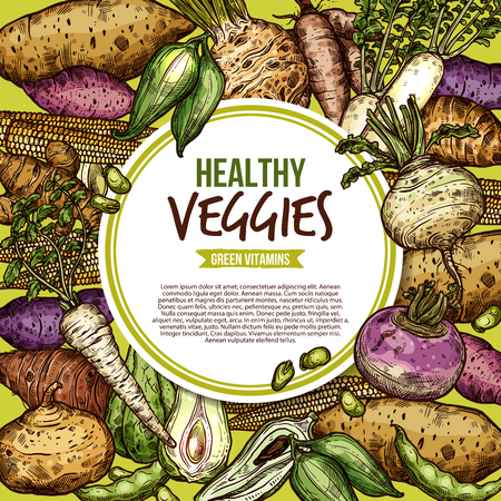 Vegetables and farm veggies sketch, egetarian healthy food. Vector natural vegan organic potato, radish or turnip and legume bread beans with jicama and cassara tuber Illustration