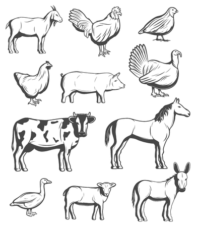Boerderijdieren, runderen en pluimveevogels. Vector boerenhuishouden van koe en geit, paard en schaap, varken en ezel muilezel en kalkoen, kip kip, haan en kwartel, ganzenvogel