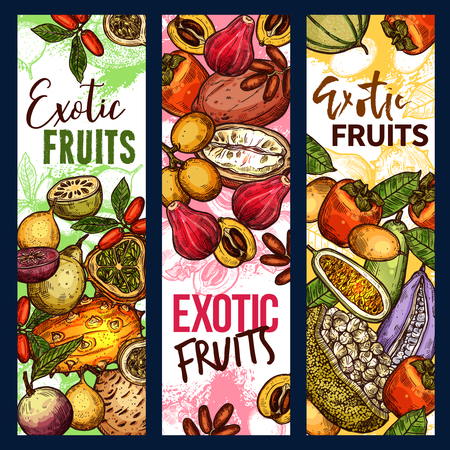 Exotic tropical fruits sketch banners. Vector design of kiwano, bael pear or star and mammee apple and loquat, persimmon and champakka or akebia fruit with marang and gandaria