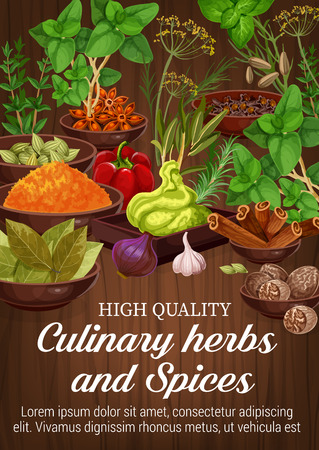 Culinary herbs and natural spices, food condiment and seasoning on wooden background. Green basil, pepper and rosemary, cinnamon, star anise and nutmeg, thyme, cardamom and garlic. Vector ilustration