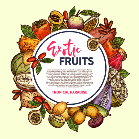 Tropical berries and exotic fruits vector frame. Kiwano, persimmon and cantaloupe, date, star apple and granadilla, kuruba, marang and akebia, miracle fruit, loquat and chambakka vector sketch Ilustração