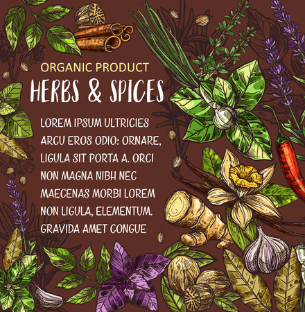 Natural spices and herbs sketch, organic plant and vegetable. Rosemary, ginger and vanilla, chilli pepper, basil and thyme, green onion, cinnamon and nutmeg, bay leaf, cardamom and lavender Ilustração