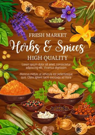 Herbs, seasoning and spices. Vector condiment. Pepper, basil and ginger, vanilla, nutmeg and dill, clove, lemongrass and cardamom, garlic and saffron, turmeric, poppy and lavender on wooden background