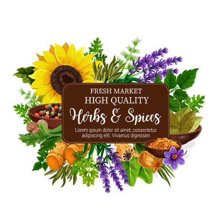 Herbs and spices with aroma plant, seed, flower and roots. Pepper, mint and rosemary, nutmeg, ginger and parsley, dill, bay leaf and saffron, lavender and poppy. Food condiments and seasonings Ilustracja