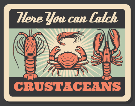 Crustaceans allowed to catch here, aquatic inhabitants as crab and lobster, shrimp and barnacle. Prawn and crayfish nutrition seafood vector. Nutrition marine food, shellfish Illusztráció