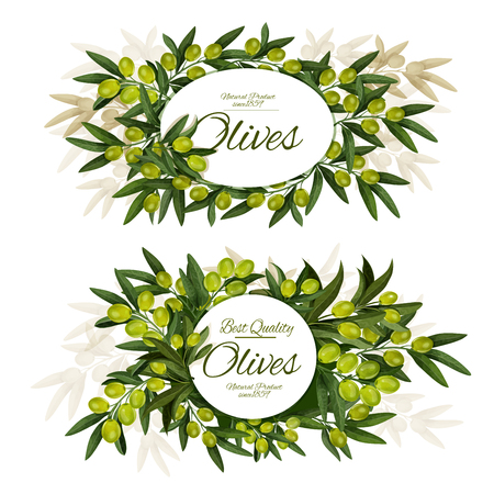 Vector olives posters, surrounded by green olive branches, fruits and leaves. Extra virgin organic olive tree greenery with round and oval frame, mediterranean cuisine ingredient Ilustração