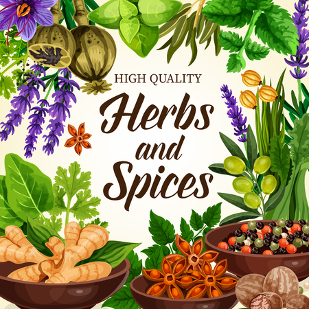 Herbs and spices, organic ginger and dill, olives and anise star in bowls, parsley and nutmeg, onion and celery. Seasonings poppy and saffron flowers, lavender and basil leaves vector elements Çizim