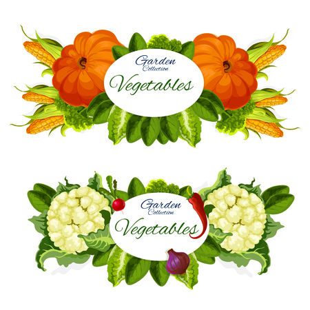 Garden vegetables, pumpkins, sweet corn and cauliflower, radish and red pepper, green lettuce leaves, onion and lettuce. Natural veggies grocery vegetarian products, vector illustration Ilustracja