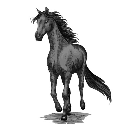 Horse running in field isolated sketch. Galloping black stallion horse of arabian breed vector icon for horse racing symbol, equestrian sport or breeding farm emblem, t-shirt print design Illusztráció