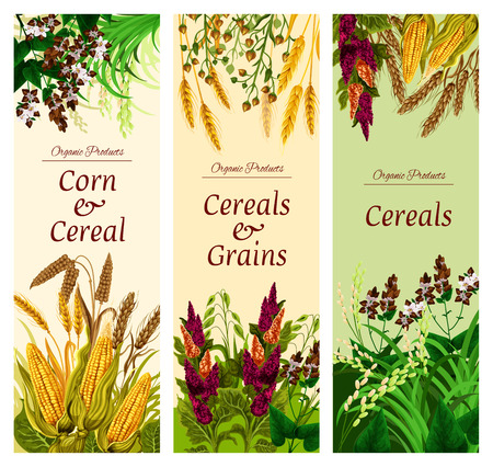 Cereal, grain and vegetable banner of natural healthy food template. Wheat, rice and barley, rye, oat and corn, quinoa, buckwheat, millet and spelt seed, bunch of crop plant flyer for superfood design Çizim