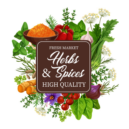 Spices and herbs of ginger and mint leaves, thyme and bell pepper, oregano and coriander, parsley and curry in bowl, garlic, marjoram and cilantro, rosemary and dill, cumin and basil. Vector design Ilustracja