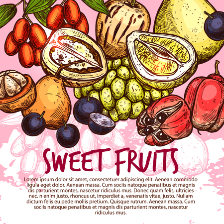 Exotic fruit and sweet tropical berry poster for menu cover template. Fresh quince, pomelo and santol, pepino, jujube, ackee and jabuticaba fruit sketch banner for natural juice, fruity dessert design Standard-Bild - 109734898